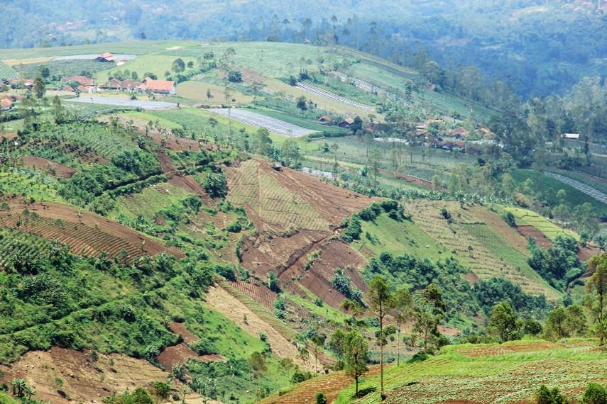 Lanskap lahan perkebunan menjadi salah satu latar yang apik untuk dipandangi