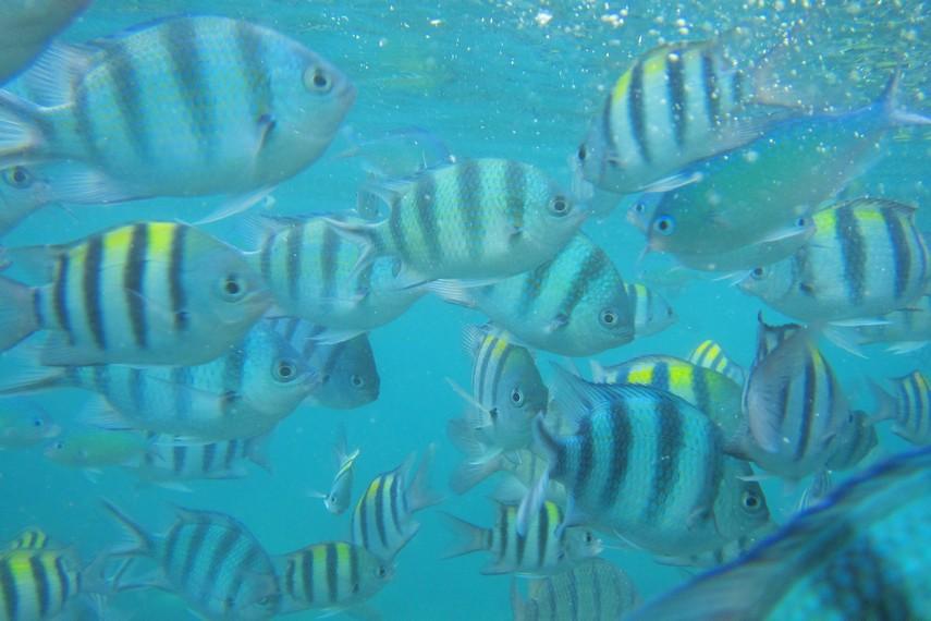 Pulau Lengkuas menjadi satu-satunya pulau yang memiliki tempat yang bagus untuk kegiatan snorkeling