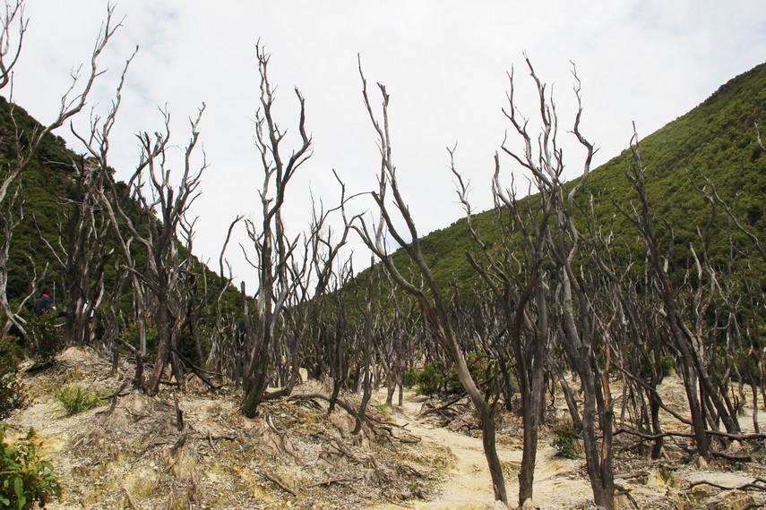 Kawasan Hutan Mati biasa dilewati para pendaki Gunung Papandayan sebelum sampai ke puncak Tegal Alun