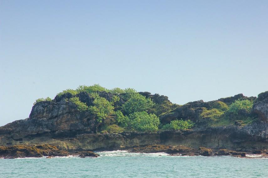 Setiap pagi atau sore menjadi waktu yang biasanya digunakan burung-burung untuk mencari makan di Pulau Manuk