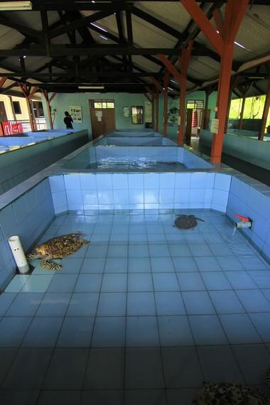 Pusat Pendidikan dan Konservasi Penyu mulai bangkit setelah dilakukan upaya rehabilitasi sekitar tahun 2003-2004