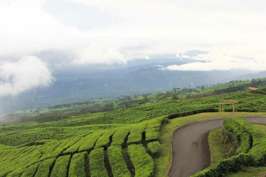 Hamparan ladang petani dan hijaunya kebun teh menjadikan Gunung Dempo layaknya bidadari bagi pariwisata Sumatera Selatan