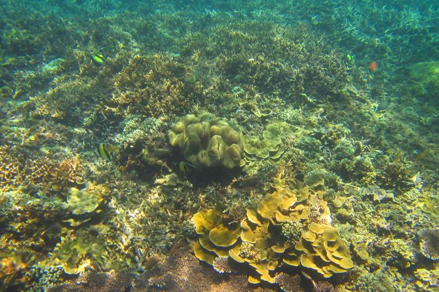 Keanekaragaman terumbu karang di salah satu spot snorkeling di Nusa Lembongan