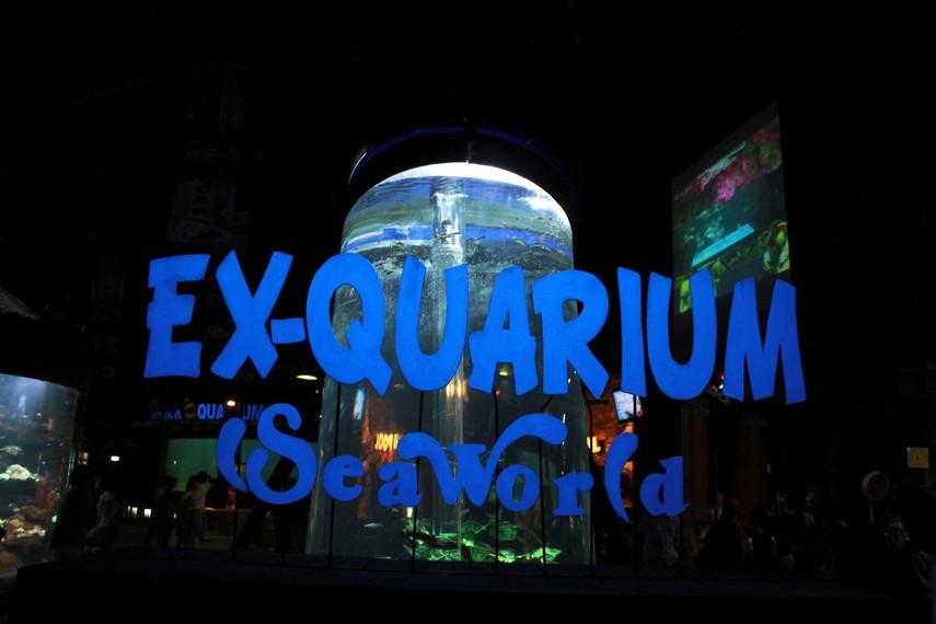Sea World Indonesia menempati lahan seluas 3 hektare dan dilengkapi dengan koleksi ikan hingga 3.000 spesies