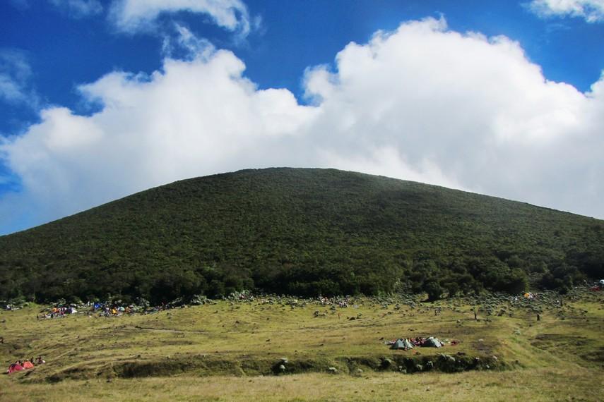 Taman Nasional Gunung Gede-Pangrango memiliki kekayaan flora dan fauna yang melimpah