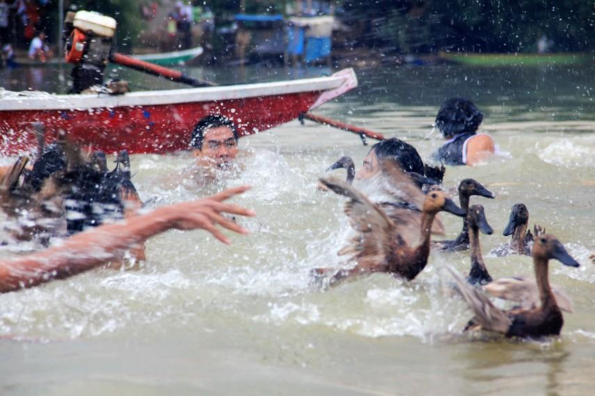 Tradisi lempar bebek menjadi bagian dalam rangkaian acara perayaan pehcun di Sungai Cisadane