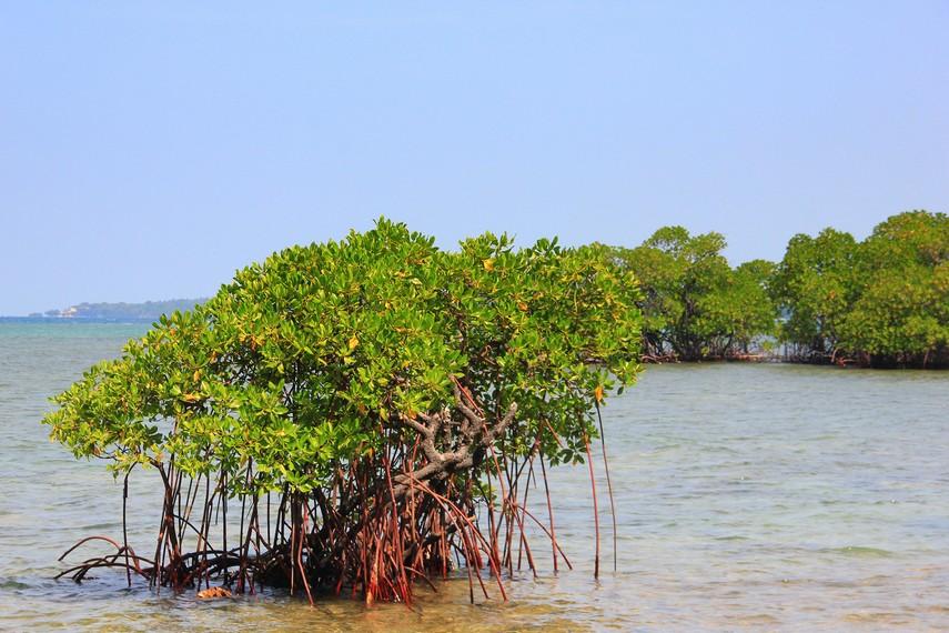 Area wisata ini menyisir bagian paling utara Pulau Karimunjawa