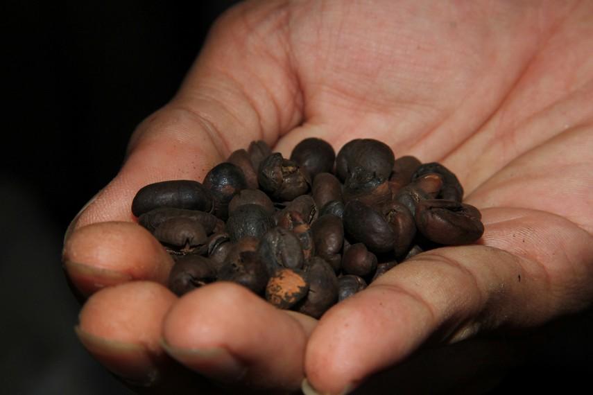Inilah biji kopi setelah melalui proses penggorengan