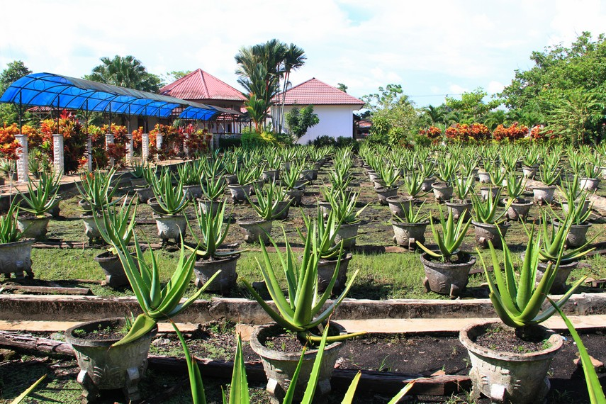 UPTD ini menggabungkan konsep berupa aloevera center, orchid center, ikan hias dan terminal agribisnis