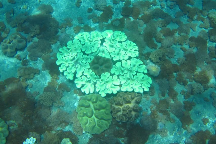 Dibandingkan Nusa Lembongan, perairan Nusa Penida memiliki keragaman hayati yang lebih kaya