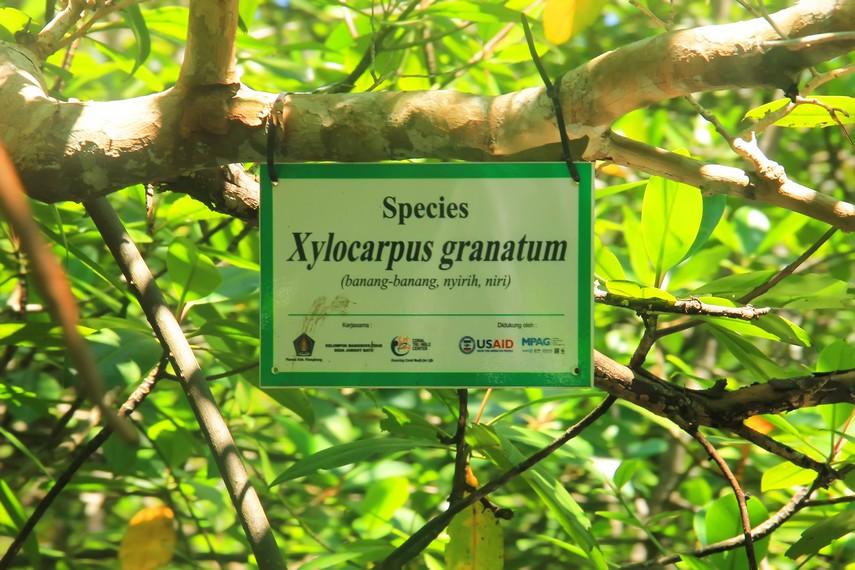 Jenis tumbuhan bakau yang dapat ditemui antara lain Xylocarpus granatum, Bruguiera gymnorrhiza, dan Avicennia lanata