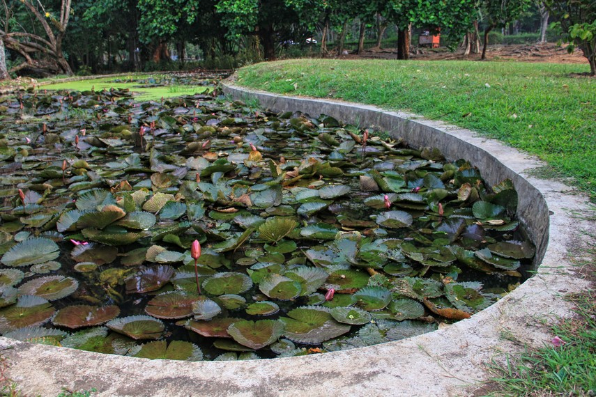 Kebun Raya Purwodadi didirikan pada 30 Januari 1941 oleh Dr Lourens Gerhard atas prakarsa seorang peneliti asal Belanda bernama Dr Dirk Fok van Slooten