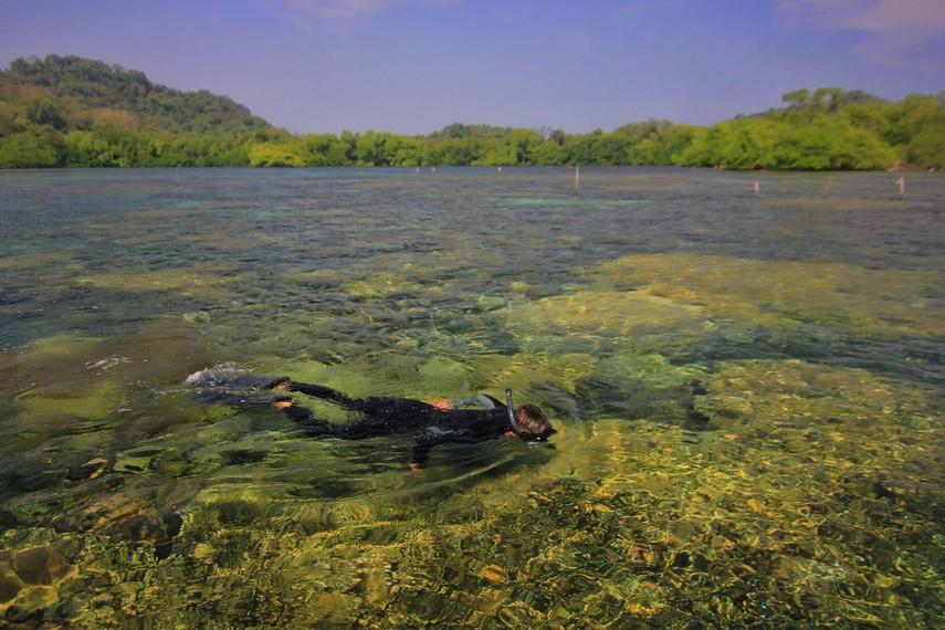 Melakukan kegiatan snorkeling menjadi salah satu aktivitas menyenangkan di Pulau Sangiang