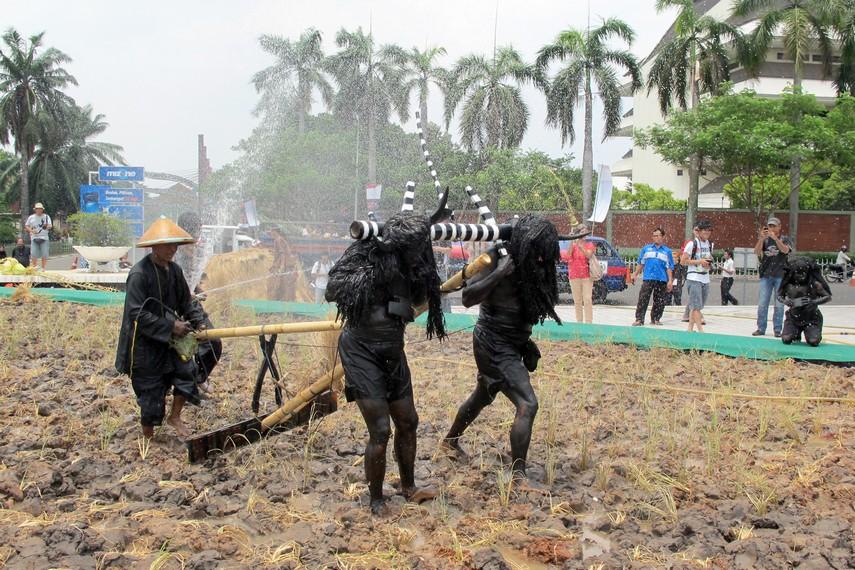 Kebo-keboan sedang melakukan aksinya membajak sawah dengan maksud melenyapkan hama