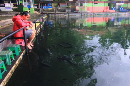Pengunjung disini dapat merelaksasikan dengan menceburkan kakinya di kolam Cigugur