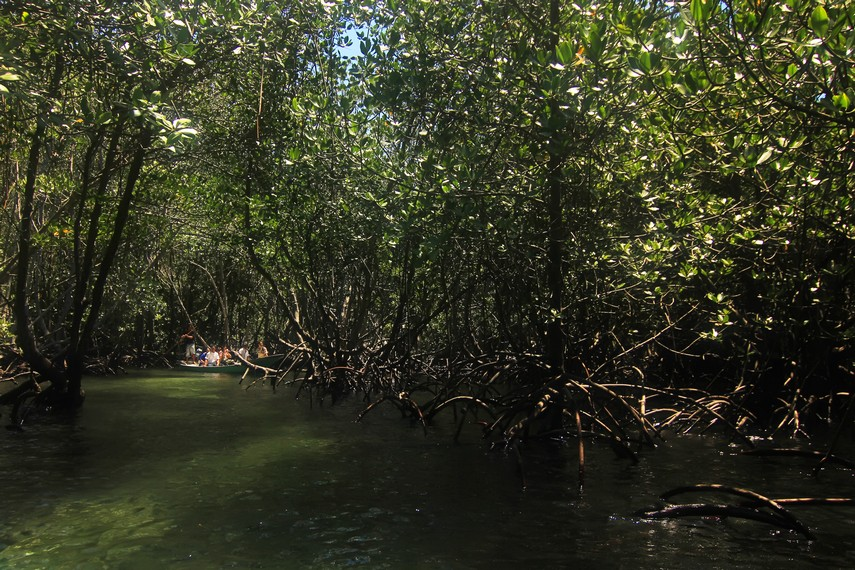 Perjalanan berkeliling hutan mangrove ini membutuhkan waktu sekitar 30 menit