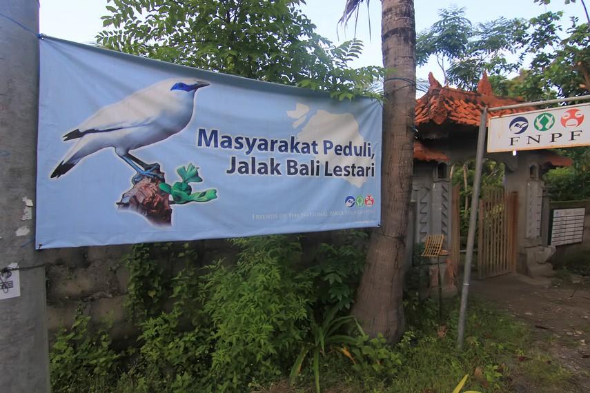 Kunci keberhasilan program konservasi jalak Bali di Nusa Penida adalah kesadaran dan dukungan dari masyarakat lokal