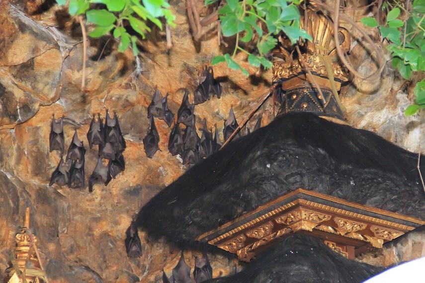 Dalam Lontar Prekempa Gunung Agung, disebutkan Gua Lawah ibarat kepala Naga Basuki, sedangkan Gua Raja adalah ekornya