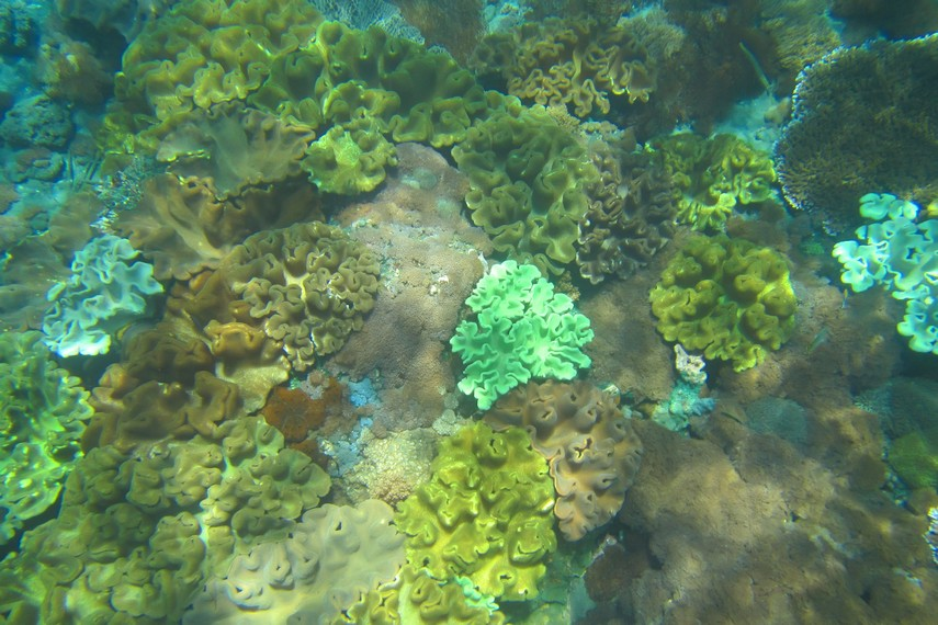 Terdapat lebih dari 200 spesies terumbu karang yang menghiasi dasar laut dangkal Nusa Penida