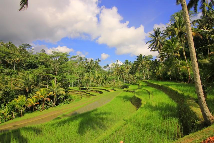 Diperkirakan sistem pertanian subak telah berkembang sejak abad ke-11 Masehi