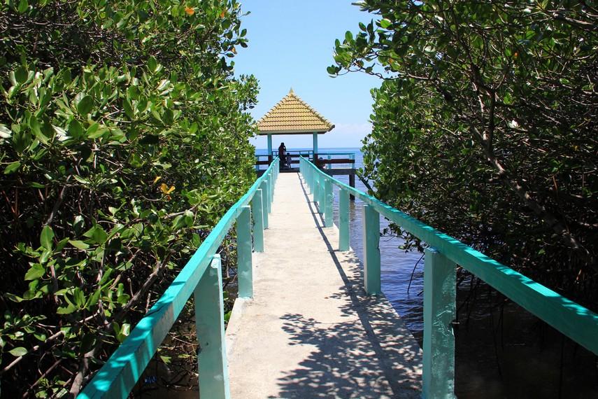 Berjalan ke barat menyusuri jalan setapak, pengunjung bisa menyaksikan eksotika tumbuhan mangrove dari dekat dengan menyusuri jembatan pandang