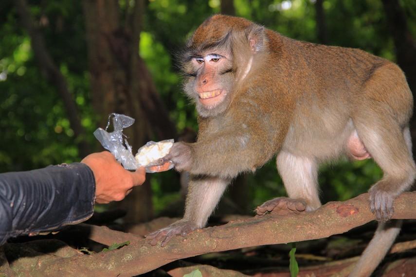 Mengunjugi Plangon, wisatawan dapat berinteraksi dengan monyet yang ada di sekitar area ini