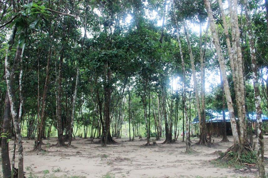 Untuk sampai ke Kawasan Batu Mentas pengunjung harus melewati hutan dengan pasir di sepanjang jalan