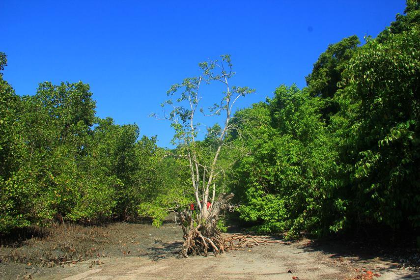 Nama Pulau Tumbak diberikan mengingat lokasinya yang berdekatan dengan Desa Tumbak