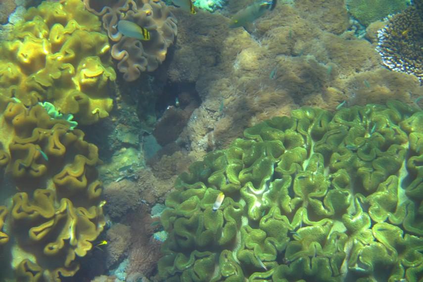 Tak kurang dari 500 spesies ikan hidup di perairan dangkal di sekitar Nusa Penida