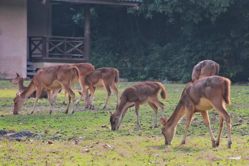 Wisatawan yang berkunjung ke sini dapat berinteraksi langsung dengan hewan-hewan yang lalu-lalang di sekitar penginapan