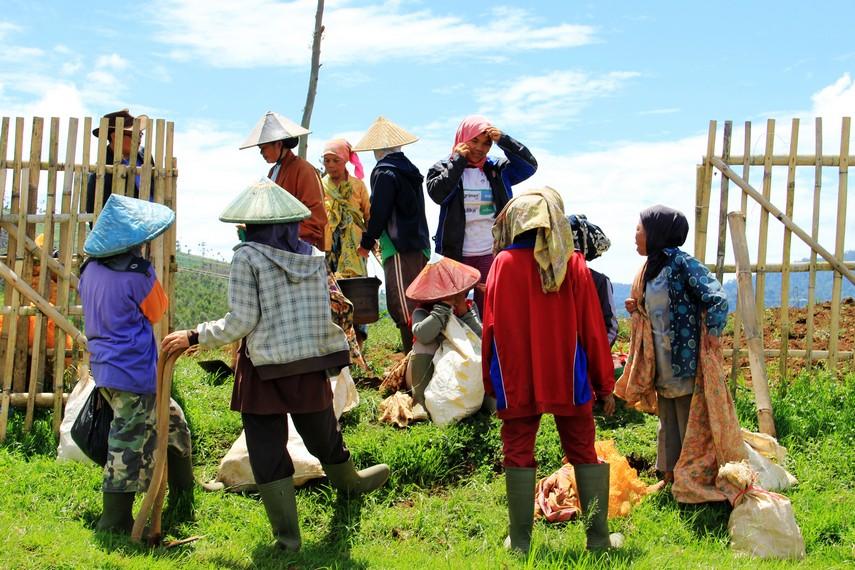Mayoritas masyarakat Puncak Darajat bekerja sebagai petani perkebunan