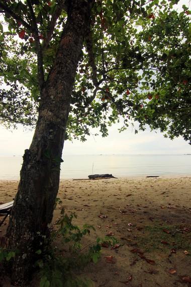 Pohon ketapang yang banyak tumbuh di sekitar pantai menjadi salah satu ciri khas pantai ini