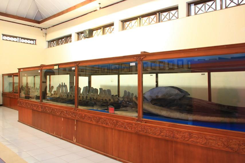 Rangka tulang ikan paus yang diberi nama warga dengan Joko Tuwo masih tersimpan rapih di dalam ruang kaca