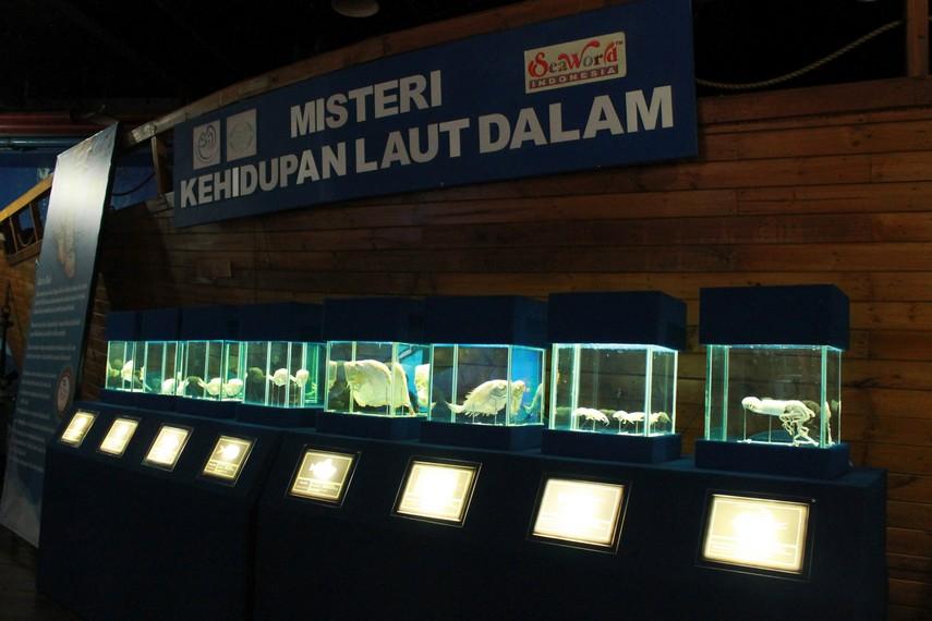Sea World Indonesia juga memiliki ikan-ikan purba dari laut dalam nusantara yang sudah diawetkan