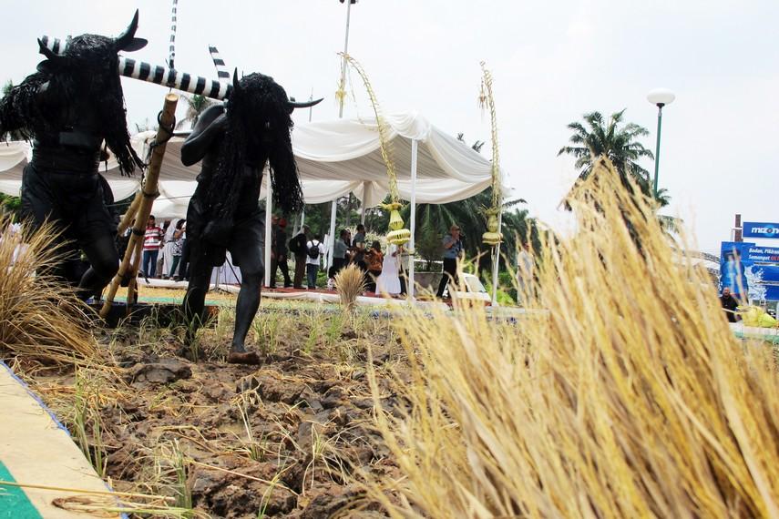 Kebo-keboan membajak sawah menjadi puncak acara dalam tradisi kebo-keboan