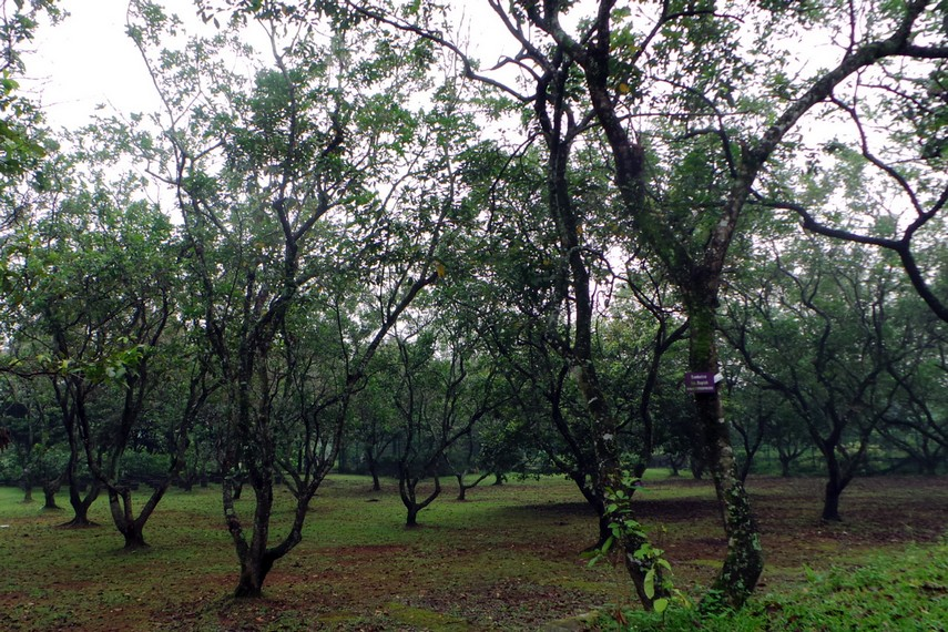 Danau Tondano memiliki luas sekitar 4000 hektar