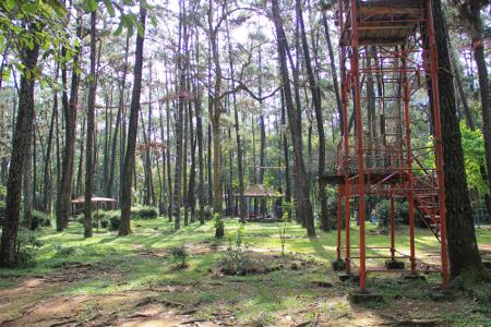 Hutan Wisata Punti Kayu ditumbuhi berbagai jenis tanaman, seperti Pinus (Pinus Merkussi), Akasia (Acacia Mangium), dan Mahoni (Switenia Swageri)