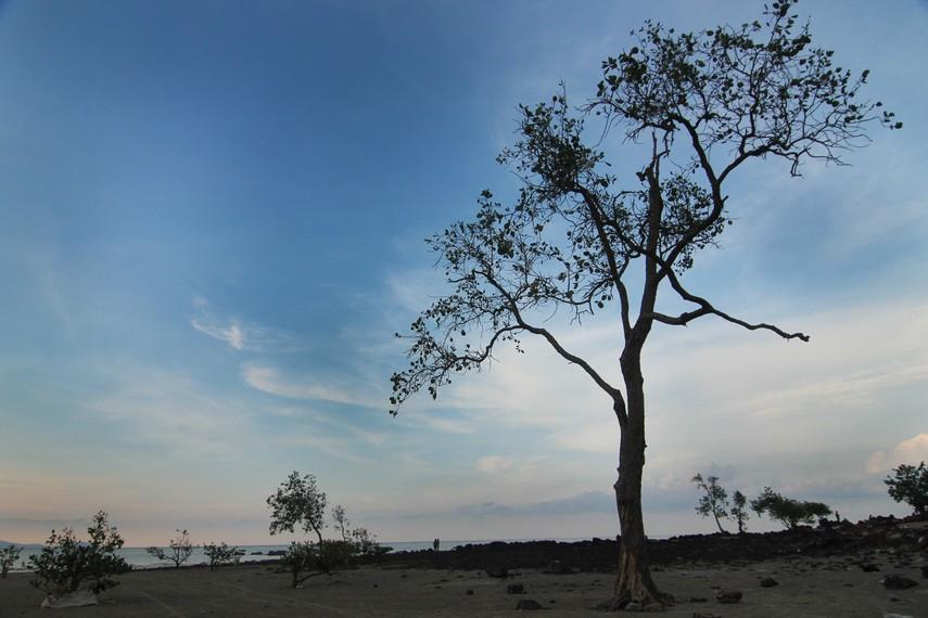 Di sekitar Pantai Pasir Padi ditumbuhi pepohonan yang membuat suasana di pantai ini menjadi permai dan teduh