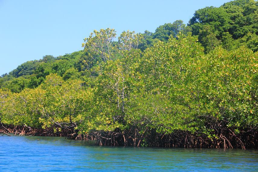 Tumbak sendiri merupakan akronim dari Tumbuhan Bakau yang luasnya mencapai 1 hektar dan mendominasi sebagain besar wilayah pulau ini