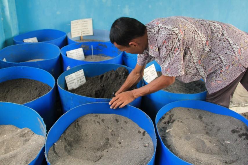 Sejak 2009 tempat penangkaran penyu ini telah melakukan penangkaran kurang lebih 30.000 ekor tukik