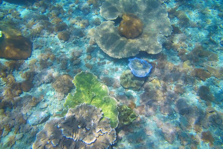 Keindahan bawah laut Nusa Penida tersebar di 20 titik lokasi penyelaman