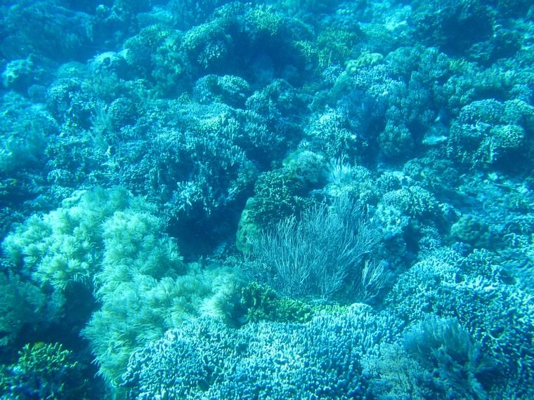 Pemandangan alam bawah laut di Pulau Siladen tidak kalah indahnya dengan Pulau Bunaken