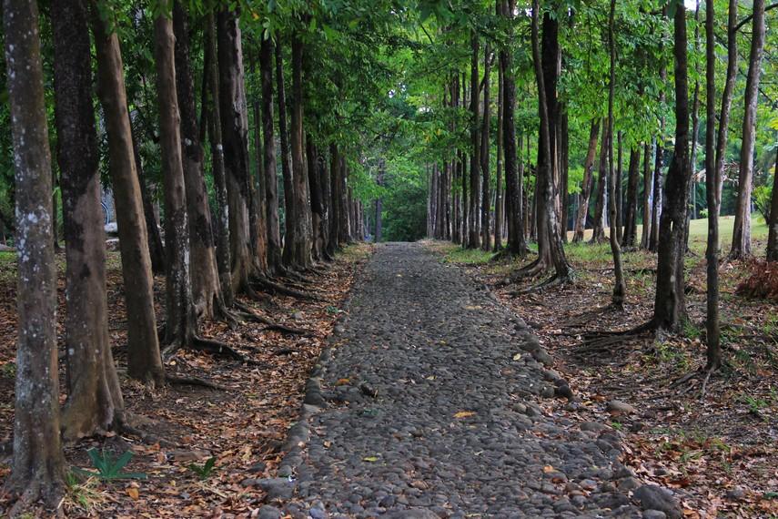 Jalan setapak yang dikelilingi pohon rindang memberikan kesejukan bagi para pengunjung kebun raya ini