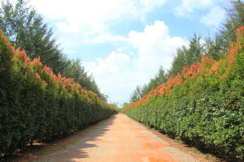 Tumbuhan perdu yang mengelilingi area Bangka Botanical Garden
