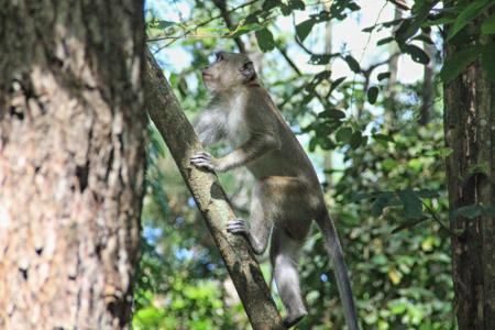 Jika beruntung, pengunjung akan menemukan sekawanan kera ekor panjang dan burung-burung langka yang hinggap di pepohonan