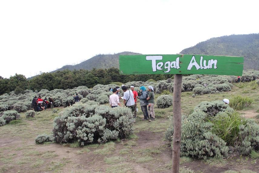 Tegal Alun menjadi titik puncak yang menjadi target pendakian para pendaki di Gunung Papandayan