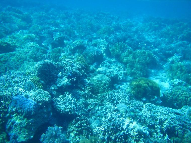 Melakukan snorkeling dan melihat dari dekat terumbu karang di Pulau Siladen menjadi pengalaman yang menyenangkan di sini