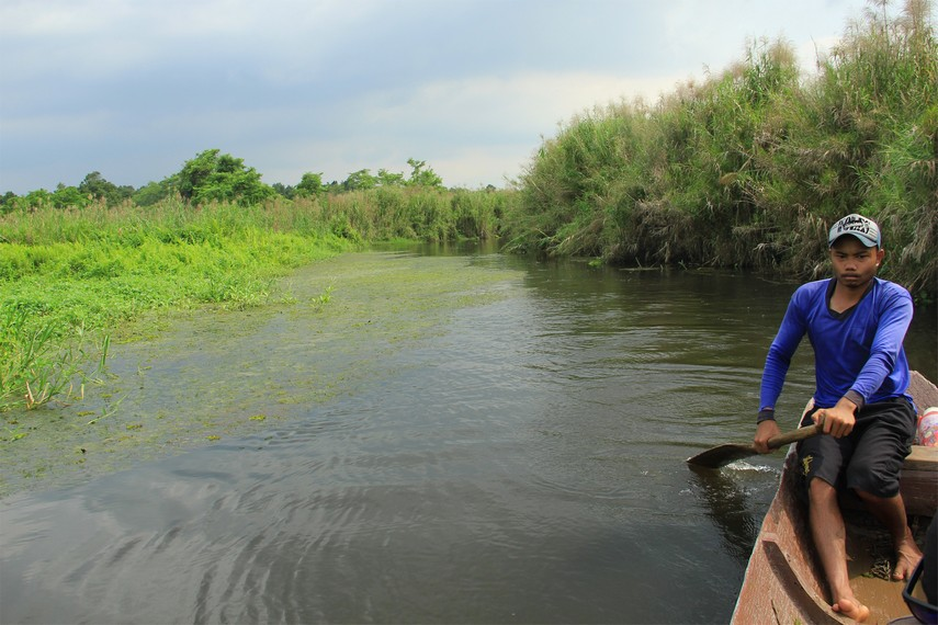 Sambil mengayuh sampan, pengunjung diajak menyusuri isi danau yang berupa rawa-rawa