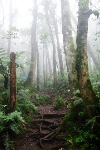 Pada ketinggian 1.000 - 1.500 di Taman Nasional Gunung Gede -  Pangrango  banyak di jumpai pohon rasamala
