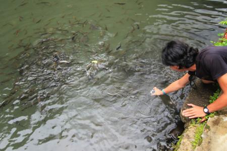 Pengunjung bisa memberi makan ikan dewa dengan roti yang dijual di sekitar kolam
